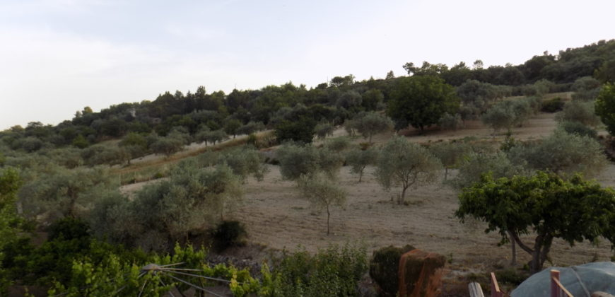 villa con terreno alberato